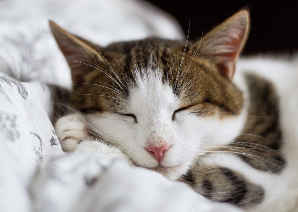 どうして眠るのか? どうしたら眠れるのか? 今日からできる9コ+αの方法